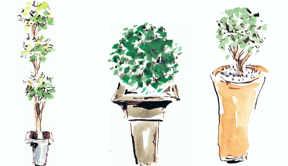 Potted plants illustrations