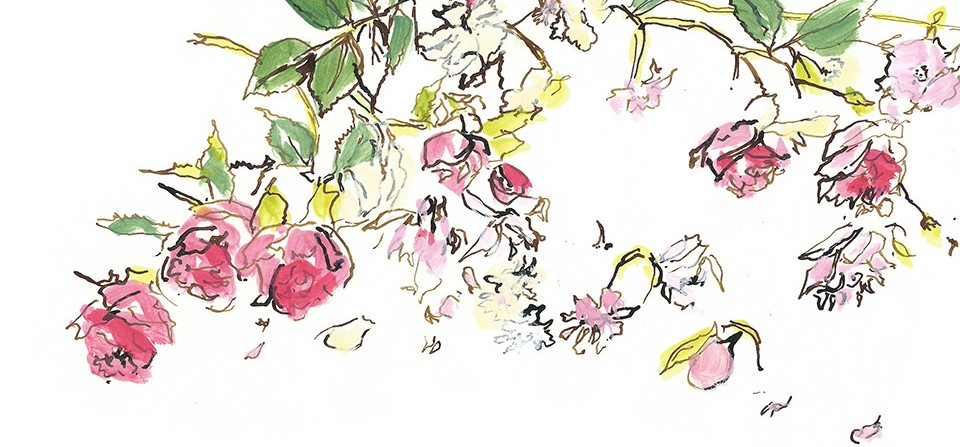 Roses Advertising Illustration