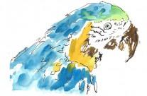 Parrot Editorial Illustration