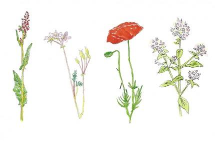 Wild Flowers Editorial Illustration